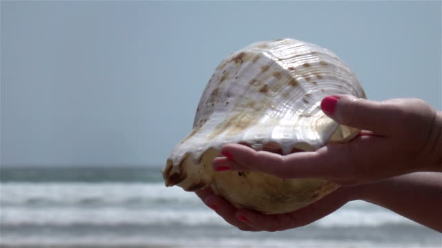 Video of hands holding shell in slow motion