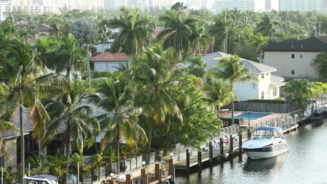 video of miami residential neighborhood covered with scenic palm trees - miami dade county stock videos & royalty-free footage