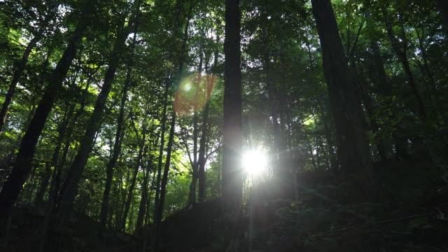 vidéos et rushes de vidéo 4k du soleil du matin dans la forêt boréale, dolly stabilisé shot - tronc d'arbre