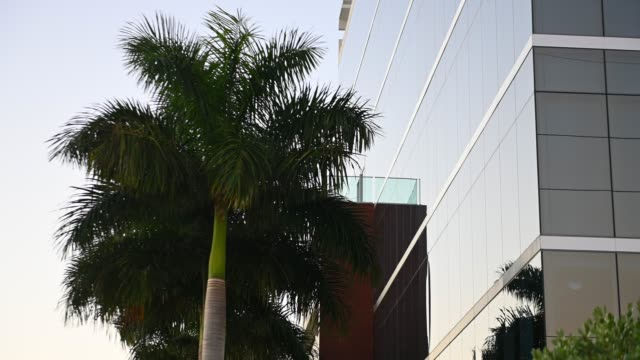 video of office building exterior with palm trees in miami florida usa - miami dade county stock videos & royalty-free footage