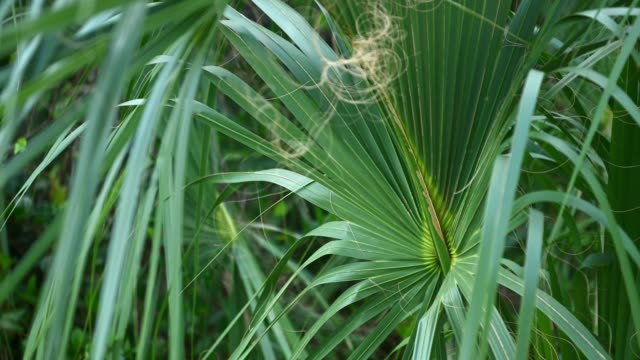video of palm leaf in  everglades national park in florida usa - miami dade county stock videos & royalty-free footage