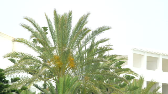 video of palm tree in 4k - shade stock videos & royalty-free footage