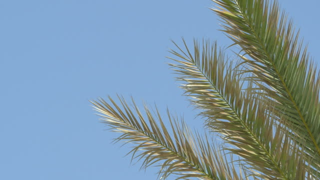 video of palm tree on the blue sky in 4k - palm leaf stock videos & royalty-free footage