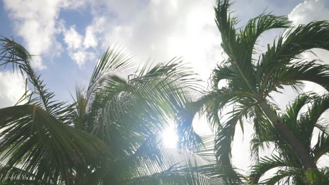 4K Video van palmbomen bewegen met de Wind tegen blauwe hemel