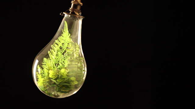 a video of plants being decorated inside the light bulb and shaking. figurative visuals of green power, renewable energy and environmental protection. - protection stock videos & royalty-free footage