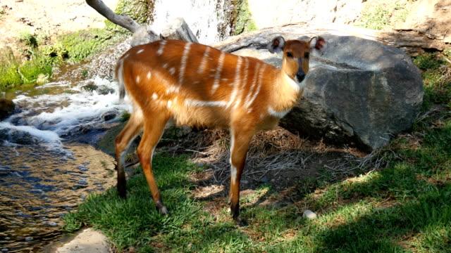 Video of roe deer