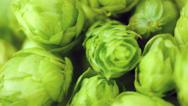 video of rotating hops in 4k - hops crop stock videos and b-roll footage