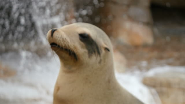 video of seal in 4k - seal animal stock videos and b-roll footage