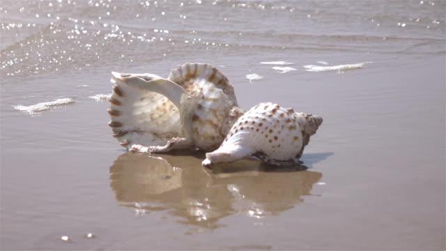 vídeos de stock, filmes e b-roll de vídeo da casca pelo oceano em real slow motion - concha parte do corpo animal