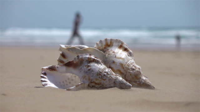 Video of shells on the beach in real slow motion