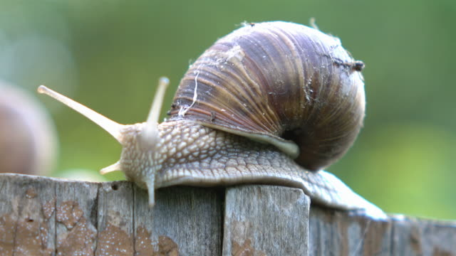 video of snail in 4k - snail stock videos & royalty-free footage