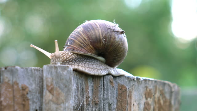 Video of snail on the tree stump in 4K