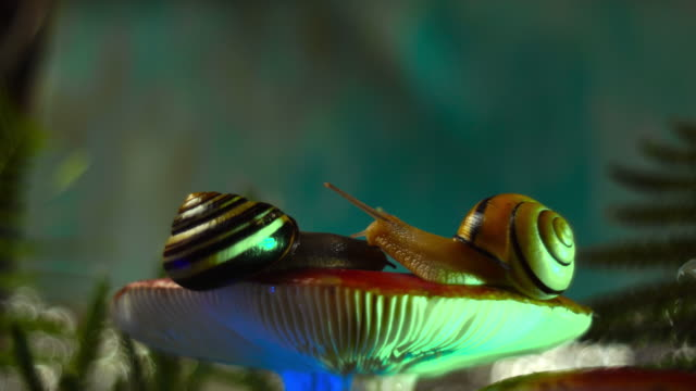 video of snails love - snail stock videos & royalty-free footage