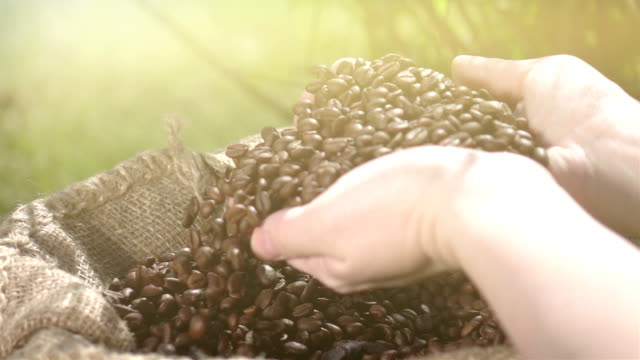 Video of taking coffee beans in real slow motion