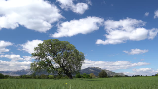 uhd video of white clouds scudding across landscape in springtime - selimaksan stock videos & royalty-free footage