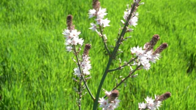 Video Of Wild Flower In Green Field