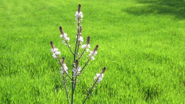 video of wild flower in green field - selimaksan video stock e b–roll