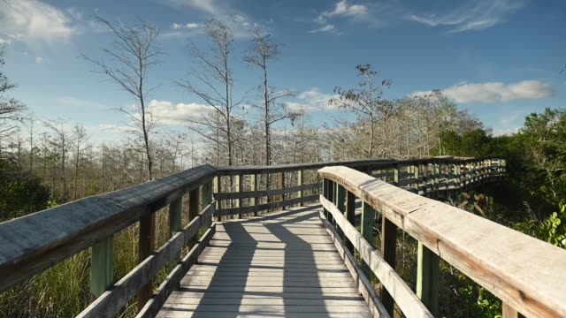 video of wooden boardwalk trail through dwarf cypress trees in everglades national park landscape in florida  usa - miami dade county stock videos & royalty-free footage