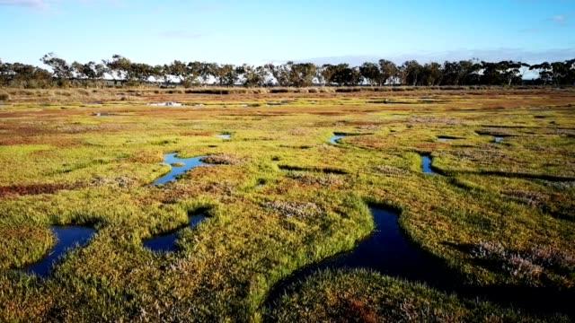 vídeos de stock, filmes e b-roll de panning video de hd de pântanos ocidentais do cabo no por do sol com as árvores no fundo - pântano