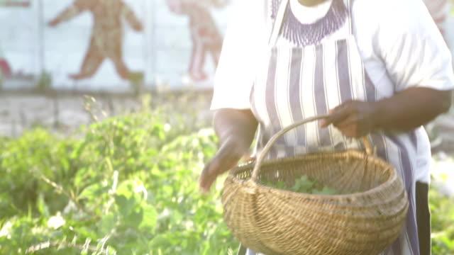 Video portret vroege ochtend Afrikaanse zakenvrouw oogsten kruiden