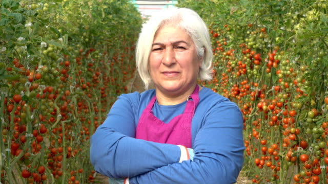 video portrait of senior woman working in tomato greenhouse - selimaksan stock videos & royalty-free footage