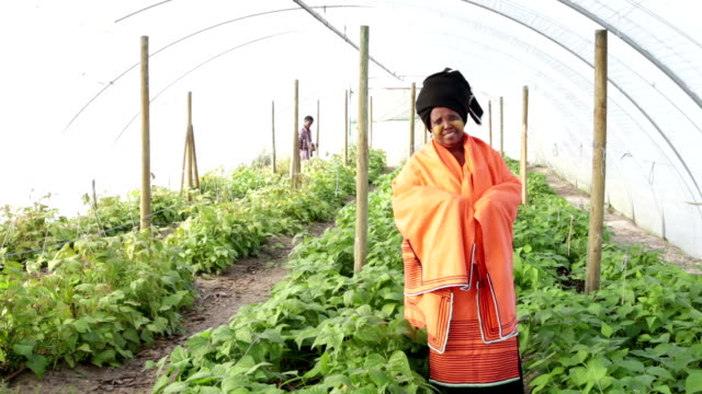 Video Portrait Traditional Xhosa African Woman in vegetable tunnel