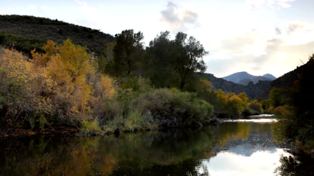 hd video south platte river and rocky mountains colorado - cottonwood tree stock videos and b-roll footage