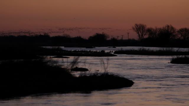 hd video sunrise over platte river sandhill cranes nebraska - sandhill crane stock videos & royalty-free footage