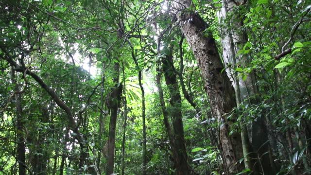 hd ビデオの熱帯の島、マダガスカル mangabe 詮索好きのご予約 - マダガスカル点の映像素材/bロール