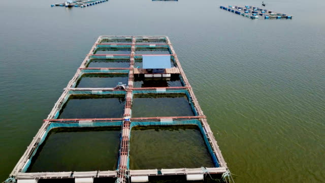 video view aerial cage fish farming, ubonrat dam in khon kean, thailand. - trout stock videos and b-roll footage