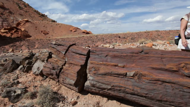 HD video woman explores Utah's Wolverine petrified forest
