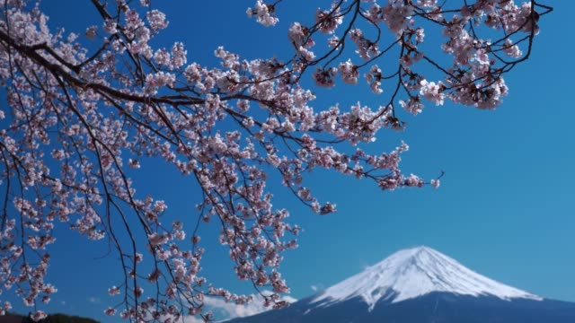 4k video:mt. fuji at kawaguchiko fujiyoshida, japan. - shrine stock videos & royalty-free footage