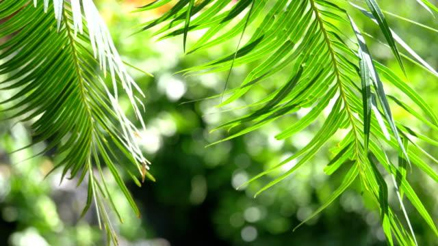 videos of Hawaii palm leaves in 4K
