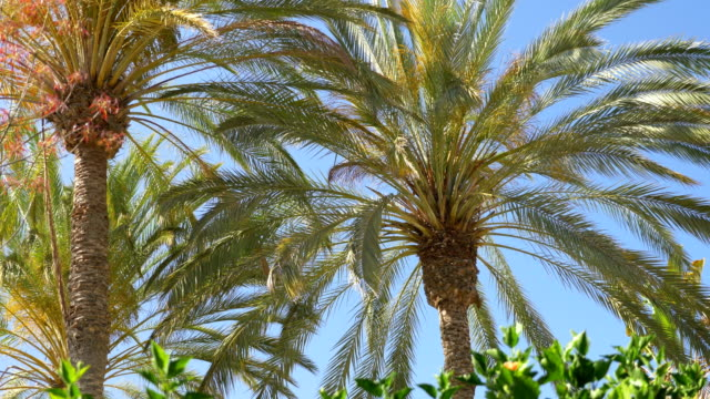 Videos of palm tree in 4K