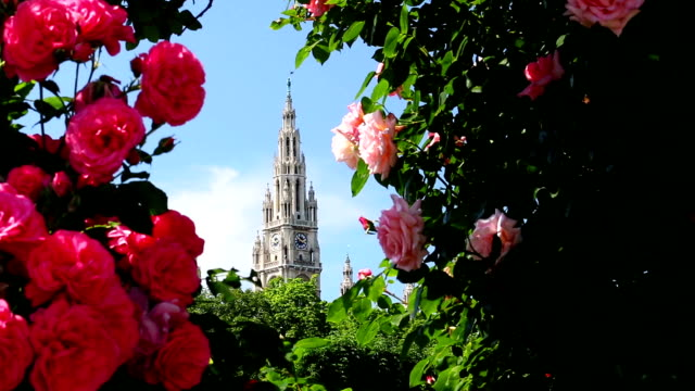 vienna town hall in spring - vienna city hall stock videos & royalty-free footage