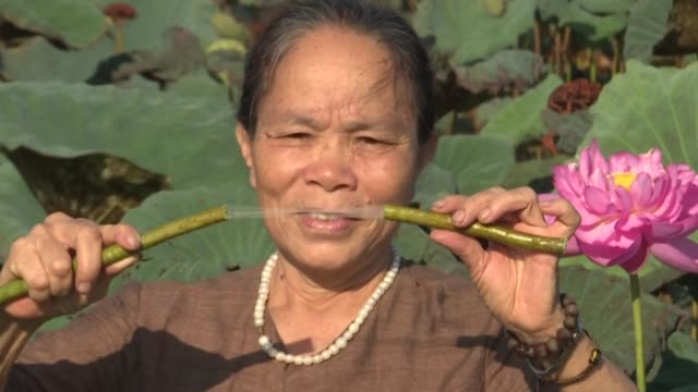 vietnamese weaver phan thi thuan hitches up her trousers as she wades into a lotus paddy to gather the stems needed to make a rare and highly... - stem stock videos & royalty-free footage