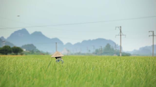 Vietnamese woman walking in rice field