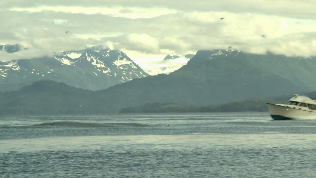 """""""view across kachemak bay from near homer, kenai peninsula, alaska, looking towards kachemak bay state park and wilderness park, grewingk glacier in background, seabirds in air, speed boat passes from right to left."""" - speed boat stock videos & royalty-free footage"""