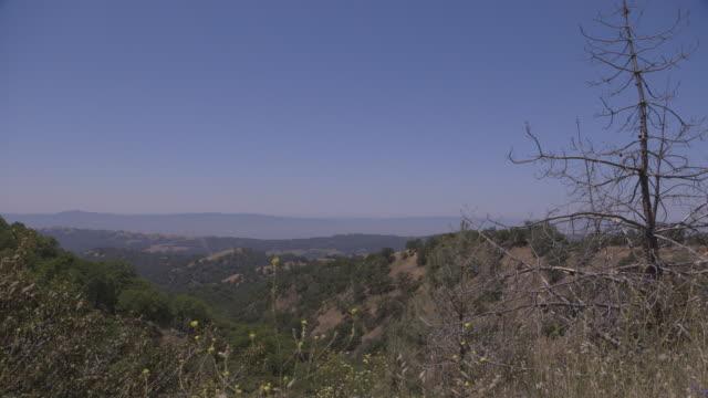 view across san jose hills, california - bare tree bildbanksvideor och videomaterial från bakom kulisserna