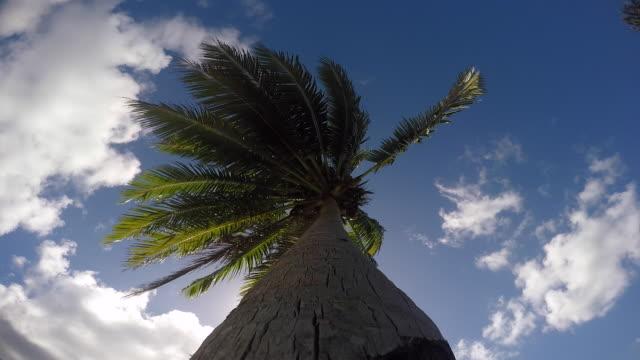 vídeos y material grabado en eventos de stock de view against a coconut tree - territorios franceses de ultramar