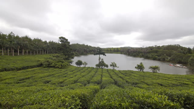 view at a tea plantation in a tropical environment - mgost stock videos and b-roll footage