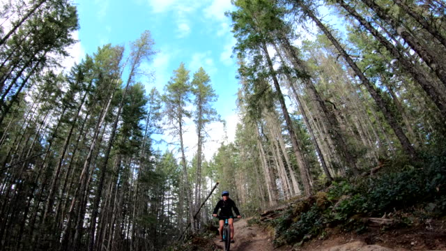 view backwards to young woman biking on narrow forest path - narrow stock videos & royalty-free footage