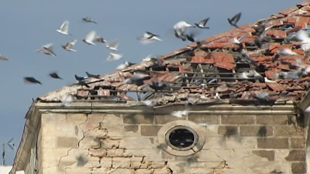 view doves flying and landing on the ruined roof of a traditional lebanese house breeding doves for sport and trade has ancient roots in the region - traditional sport stock videos & royalty-free footage