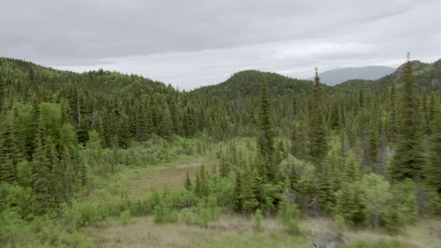 ws aerial view flying view low over forested mountains in brooks river area / alaska, united states - alder tree stock videos & royalty-free footage
