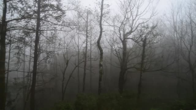 view form window looking at forest - bare tree stock videos & royalty-free footage