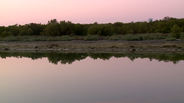 view from a boat of the shoreline of the mangrove national park at sunset. - ペルシャ湾点の映像素材/bロール