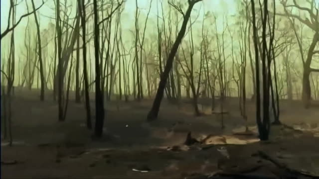 view from a car of forest ravaged by bush fire in new south wales - tree trunk stock videos & royalty-free footage