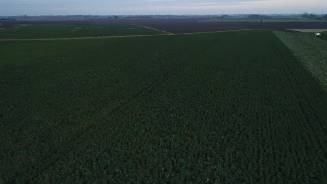 view from a drone flying over sprout fields in lincolnshire - brussels sprout stock videos & royalty-free footage