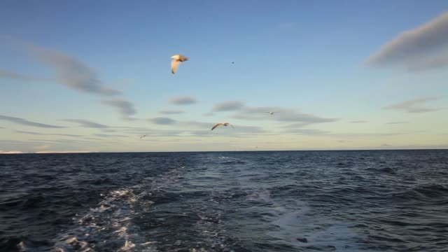view from a fishing boat on the sea in winter - sea bird stock videos and b-roll footage