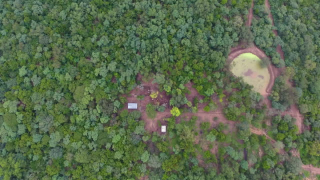 view from above with drone of cattle barn and around it full of trees and lots of vegetation - cattle stock videos & royalty-free footage